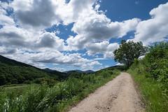 20190813XT3_6232 (Gansan00) Tags: fujifilm xt3 xf18135 fujifilmxseries japan hiroshima ブラリ旅 聖湖 深入山 snaps hijiriko landscape summer 8月 green akiota