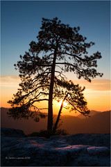 Lone Pine (Sandra Lipproß) Tags: pine tree sunset sunburst sunstar sierranevada california usa sequoianationalpark nature landscape travel outdoor mountains ambientlight beetlerock