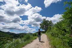20190813XT3_6234 (Gansan00) Tags: fujifilm xt3 xf18135 fujifilmxseries japan hiroshima ブラリ旅 聖湖 深入山 snaps hijiriko landscape summer 8月 green akiota