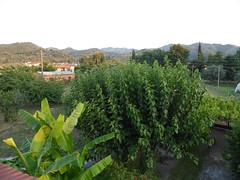 Γαβαλού!!  P1050707 (amalia_mar) Tags: trees green village gavalou aitoloakarnania greece nature sundaylights colorfulnature greentuesday