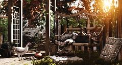 Midsummer afternoon (Alexa Maravilla/Spunknbrains) Tags: nutmeg belle secondlife sl decor decoration home blog blogger virtualworld 3dmesh fundati applefall jian digitalphotography digitalart chickens bread basket outdoors bench trees
