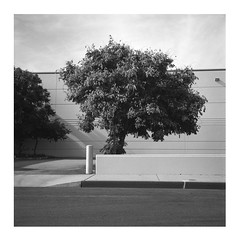Parking lot pastoral (ADMurr) Tags: la eastside parking lot tree bw black white hasselblad 500cm 80mm zeiss planar ilford dba204