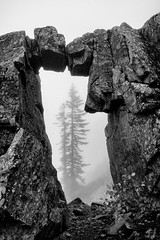 The Portal (Joshua Johnston Photography) Tags: arch silverstarmountain washington pacificnorthwest pnw fog joshuajohnston sonya7iii variotessartfe2470mmf4zaoss blackandwhite bnw tree nature rock
