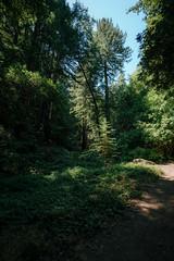 Redwood Regional Trail Walk (Graham Gibson) Tags: sony a7rii tamron 1728mm f28 dxr di iii redwood regional park forest trees trail hike
