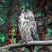 Owl Plaswijckpark Rotterdam 3D
