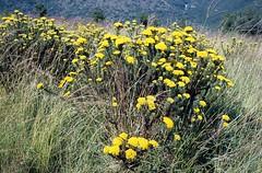 Umgeni Valley Nature Reserve (Proteus_XYZ) Tags: southafrica kwazulunatal howick umgenivalley naturereserve minoxgt agfaprecisact100