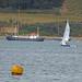 Seahorse and yellow buoy