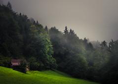 Valley of Trettach, Bavaria (Netsrak) Tags: trettach mist fog nebel valley tal bavaria bayern nature natur landschaft landscape
