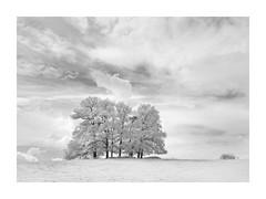 Harmony (janinelee66) Tags: infrared clouds fields trees bird nikon monochrome white hillside