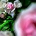 Pink Soft Moment