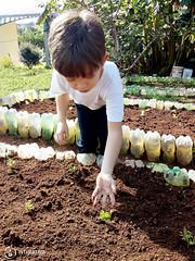 """Uma horta em minha escola – 2º Período • <a style=""""font-size:0.8em;"""" href=""""http://www.flickr.com/photos/134435427@N04/48530546391/"""" target=""""_blank"""">View on Flickr</a>"""