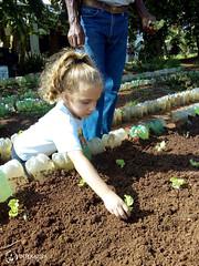 """Uma horta em minha escola – 2º Período • <a style=""""font-size:0.8em;"""" href=""""http://www.flickr.com/photos/134435427@N04/48530707067/"""" target=""""_blank"""">View on Flickr</a>"""