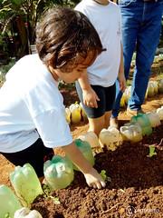"""Uma horta em minha escola – 2º Período • <a style=""""font-size:0.8em;"""" href=""""http://www.flickr.com/photos/134435427@N04/48530708172/"""" target=""""_blank"""">View on Flickr</a>"""