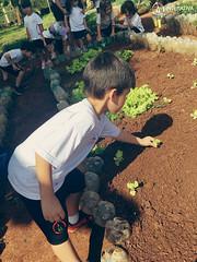 """Uma horta em minha escola – 2º Período • <a style=""""font-size:0.8em;"""" href=""""http://www.flickr.com/photos/134435427@N04/48530836227/"""" target=""""_blank"""">View on Flickr</a>"""