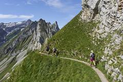 Along the trail (Karl Le Gros) Tags: alpstein 2019 switzerland schäflerhütte säntis trail xaviervonerlach