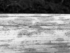 Project 365/Day 223: Summer Rain