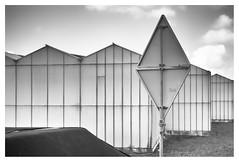 Westland (leo.roos) Tags: bw compo nl glas bord driehoek rangefinder a7 1953 darosa leidolf leoroos leidolflordomat lordonar5028 leidolfwetzlarlordonar12850 noiretblanc triangle greenhouse trafficsign westland hothouse kas verkeersbord