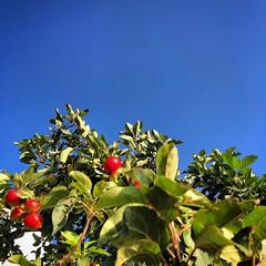 diary #2420: The Singing Ringing Tree