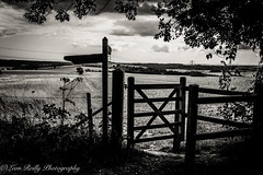 Hampshire South Downs (broadswordcallingdannyboy) Tags: leonreillyphotography hampshire southdowns leonreilly mood contrast england landscape qecp hampshiredowns dramaticsky light summer2019 donotcopy clouds mono bw bwlandscape atmosphere countryside eos7d 24mm pancakelens copyright leon
