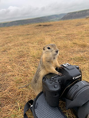 Okay Everyone, Smile! (Joe Chowaniec Images) Tags: canon camera squirrel groundhog groundsquirrel nature gopher prairiedog wildlife animal animals rodent cute fun canada alberta drumheller