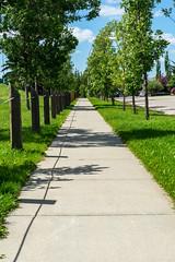 Relaxing Summer Sidewalk (Bracus Triticum) Tags: relaxing summer sidewalk calgary カルガリー アルバータ州 alberta canada カナダ 7月 七月 文月 shichigatsu fumizuki bookmonth 2019 reiwa july