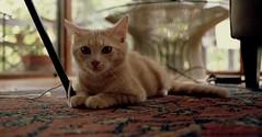 cat (bluebird87) Tags: cat dx0 epson v600 film kodak ektar nikon f100 c41