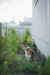 猫 (fumi*23) Tags: ilce7rm3 sony sel85f18 85mm fe85mmf18 a7r3 animal cat gato neko 猫 ねこ ソニー