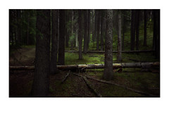 ...ceaseless transformation... (VanveenJF) Tags: forest banff canada alberta springs golfcourse tree nature creation landscape zeiss 35mm sony a7ll green dark logs leafs