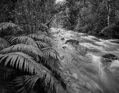Mangawhero Stream: Ohakune (matthew_comeskey) Tags: tongariro national park 4x5 adox film toyo newzealand ohakune