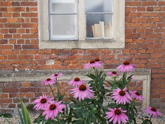 old bricks in the wall and books on the windowsill (quietpurplehaze07) Tags: window salisbury books windowsill pink