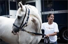 One way or another (Fitzpaine) Tags: horse horsebox horsetransport whitehorse bridle bit staplefitzpaine westcountry farm equestrian uk england taunton davidjdalley xt2 fujifilmxt2 chain gold