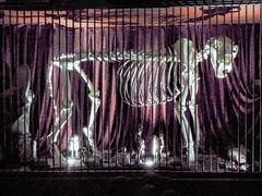 The Little People in the Lion's Chamber (Steve Taylor (Photography)) Tags: lion skeleton littlepeople cage orange mauve white uk gb england greatbritain unitedkingdom london shadow bars viktorwyndmuseum