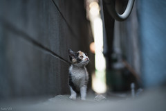 猫 (fumi*23) Tags: ilce7rm3 sony sel85f18 85mm fe85mmf18 a7r3 animal alley cat kitten gato neko ねこ 猫 ソニー bokeh
