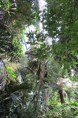 (sftrajan) Tags: park lyon france parcdelatêtedor botanicgarden jardinbotanico serre grandesserres jardinbotaniquedelyon tropicalplants