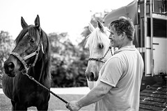 Hold (Fitzpaine) Tags: horse horsebox horsetransport horses rope bridle equestrian somerset taunton staplefitzpaine westcountry england uk rural countrylife davidjdalley xt2 fujifilmxt2 blackandwhite mono monochrome