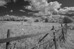 Scrubland more than farm (IanAWood) Tags: converted720nmirsensor digitalinfrared fullspectrumphotography hertfordshire infraredblackandwhite nikkorafs1224mmf4gdx nikond70ir rickmansworth walkingwithmynikon
