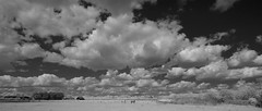 Two Horses under the clouds (IanAWood) Tags: converted720nmirsensor digitalinfrared fullspectrumphotography harefield infraredblackandwhite lbofhillingdon nikkorafs1224mmf4gdx nikond70ir walkingwithmynikon westlondon