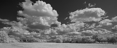 Clouds and trees (IanAWood) Tags: converted720nmirsensor digitalinfrared fullspectrumphotography harefield hertfordshire infraredblackandwhite lbofhillingdon nikkorafs1224mmf4gdx nikond70ir rickmansworth walkingwithmynikon westlondon