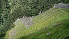 An outstanding Inca site (Chemose) Tags: sony ilce7m2 alpha7ii mai may pérou peru incatrail chemindelinca caminoinca wiñaywayna city cité inca ruine ruin terrasse terrace hdr