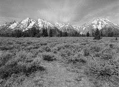 Grand Teton National Park (LarsHolte) Tags: pentax 645 pentax645 645n 6x45 smcpentaxa 35mm f35 120 film 120film analog analogue kosmo foto mono 100iso caffenolc mediumformat blackandwhite classicblackwhite bw monochrome filmforever filmphotography ishootfilm larsholte homeprocessing usa wyoming grandtetons landscape mountains moose