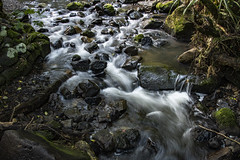 The stream after rain (Ian@NZFlickr) Tags: slowexposure stream rocks moss movement frasers gully dunedin nz