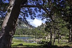 06 039 43 - Hautes Pyrénées, massif de Néouvielle, les Laquettes (Jean-Pierre Ossorio) Tags: hautespyrénées lac eau forêt arbre