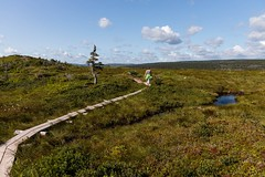 Trail Walking (Karen_Chappell) Tags: eastcoast trail path boardwalk tree nature outdoors landscape scenery people scenic hike hiker hiking capespear newfoundland nfld canada atlanticcanada avalonpeninsula green blue evergreen bog wood wooden clouds sky land canonef24105mmf4lisusm eastcoasttrail pond plants