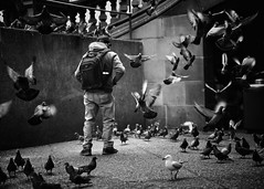 fourandtwenty (gro57074@bigpond.net.au) Tags: pbwa stphotographia fourandtwenty candid man birds pigeons georgestreet townhall sydney d850 nikon 2470mmf28 tamron guyclift bw monochromatic monotone monochrome mono blackwhite streetphotography
