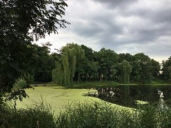 On a cloudy day at the pond (lpokotylo) Tags: sundaylights