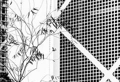 Coexistence.jpg (Klaus Ressmann) Tags: omd em1 china facade hongkong klausressmann winter blackandwhite branches cityscape design flccity omdem1