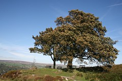 Tree next to White Wells - Ilkley Moor (jumcesex12) Tags: ilkley moor yorkshire dales