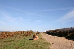 Alfie (jumcesex12) Tags: ilkley moor yorkshire dales