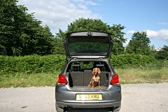 Alfie ready to get exploring (jumcesex12) Tags: ilkley moor yorkshire dales