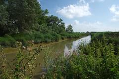 Mark Sewell A circular walk from Sandwich. The River Stour. (favmark1) Tags: kent sandwich walk summer riverstour